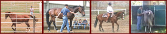 4 photos de Jerome Dumont en equitation ethologique